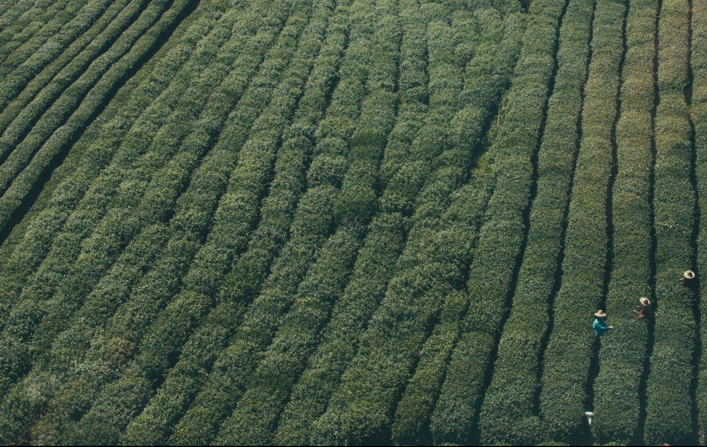 Rotacion y asociacion de cultivos
