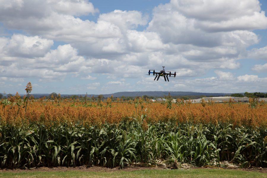 Asesoramiento agrícola y drones