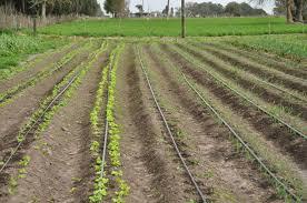 Diseño de cultivo y sistema de riego