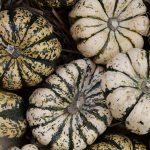 Nuevas formas de comercialización de productos agrícolas