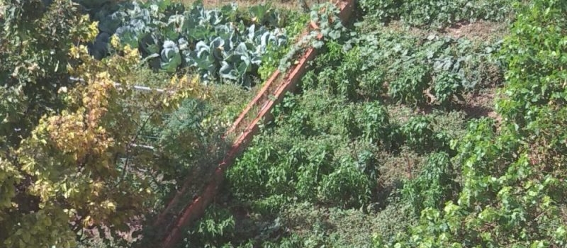 Diseño proyectos agricultura