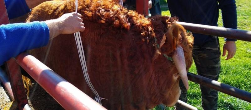 Asesoramiento en ganadería